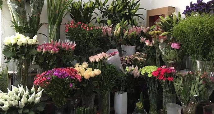 桑尼异度花卉