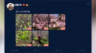 c-岳云鹏打扮休闲与花树合影 笑容灿烂被赞很可爱